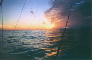 Cape light charters deep sea fishing on cape cod and the for Cape cod deep sea fishing